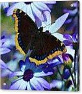 Butterfly In Blue Acrylic Print