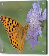 Butterfly On Right Position Acrylic Print