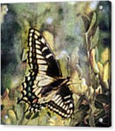 Butterfly On Yellow Flowers Acrylic Print