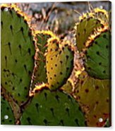 Cactus Heart In Sunset Acrylic Print