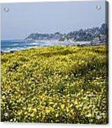 California Wildflowers Acrylic Print