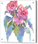 Carmel Begonias Acrylic Print