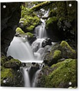 Cascading Creek In Temperate Rainforest Acrylic Print