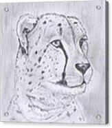 Cheeta Watching Acrylic Print