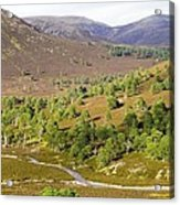 Cleared Scots Pine Forest Acrylic Print
