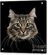 Close Up Of Cats Face Acrylic Print