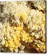 Close-up Of Yellow Salt Crystals Acrylic Print