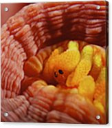 1 Cm Yellow Tube Polyp With A Small Acrylic Print