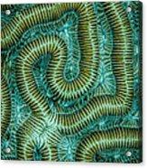 Coral Design Acrylic Print