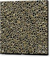 Cork Wood, Sem Acrylic Print