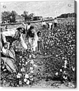 Cotton Industry, Early 20th Century Acrylic Print