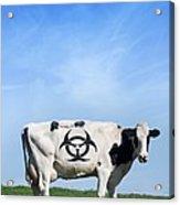 Cow And Biohazard Sign, Artwork Acrylic Print