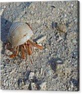 Crabby Times Acrylic Print