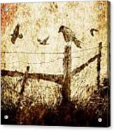 Crows And The Corner Fence Acrylic Print