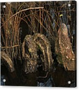 Cypress Knee Monster Acrylic Print