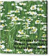Daisy Fresh Acrylic Print