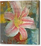 Day Lily Acrylic Print