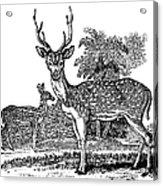 Deer Acrylic Print by Granger