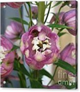 Delphinium Named Magic Fountains Lilac Pink Acrylic Print