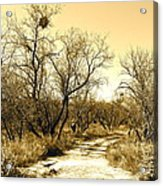 Desert Trail Acrylic Print