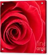 Detail Of Red Rose Acrylic Print