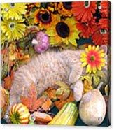 Di Milo - Flower Child - Kitty Cat Kitten Sleeping In Fall Autumn Harvest Acrylic Print