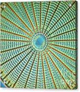 Diatom Alga, Arachnoidiscus Acrylic Print