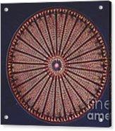 Diatom Acrylic Print by Eric V. Grave