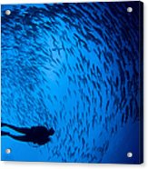 Diver And A Large School Of Bigeye Acrylic Print