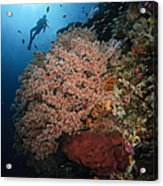 Diver Over Soft Coral Seascape Acrylic Print