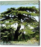 Do-00512 Cedar Forest Acrylic Print