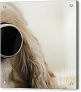 Dog With Sunglasses Acrylic Print