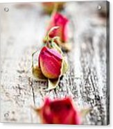 Dried Rose Buds Acrylic Print