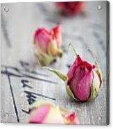 Dried Roses Acrylic Print