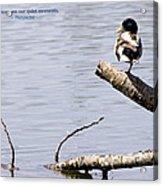 Duck On A Log Acrylic Print