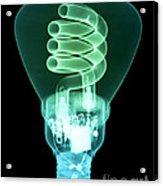 Energy Efficient Light Bulb Acrylic Print by Ted Kinsman
