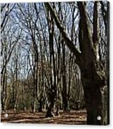 Epping Forest Acrylic Print