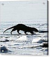 European Otter On Sea Ice Acrylic Print