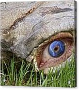 Eye Of A Dinosaur Lightning Acrylic Print