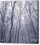 Fairy Tale Forest Acrylic Print
