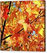 Fall Colors Acrylic Print by Carlos Caetano