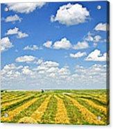 Farm Field At Harvest In Saskatchewan Acrylic Print