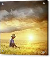 Farmer Checking His Crop Of Wheat  Acrylic Print