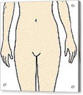 Female, Full Anterior View Acrylic Print