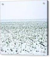 Field In Winter Acrylic Print