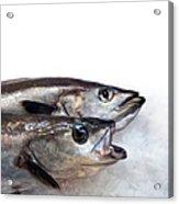 Fish On Ice Acrylic Print