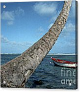 Fishing Boat And Palm Trunk Acrylic Print