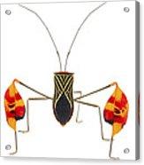Flagfooted Bug Barbilla Np Costa Rica Acrylic Print