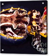 Flamboyant Cuttlefish Acrylic Print