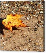 Floating Autumn Leaf Acrylic Print